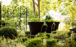 Culinary Gardens St suprey