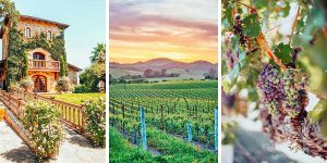 Napa-Wineries-Feature