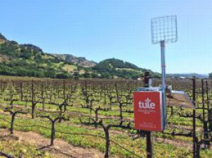 Tule Technologies vineyard sensor