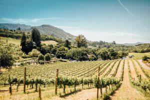 Vineyard-in-Sonoma-CA-Unsplash