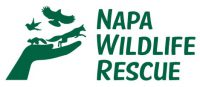 Wildlife-Rescue-Logo