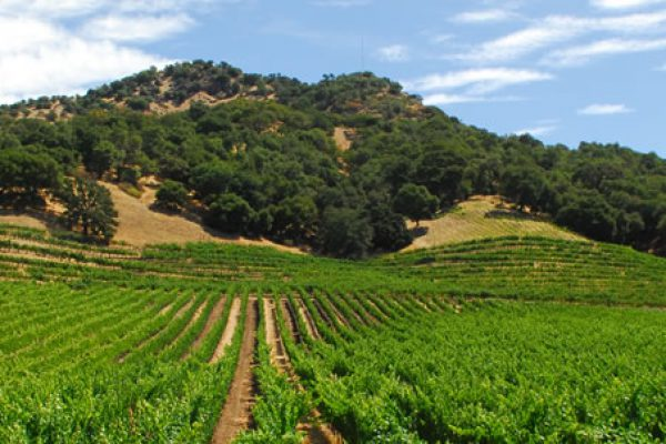 ilsley vineyards