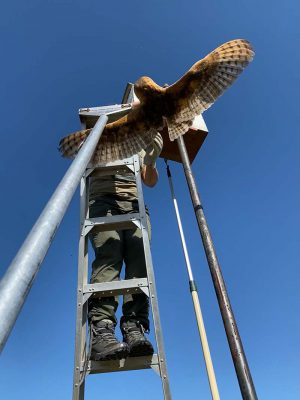 p21_Laura-Echavez_worker-extracts-owl-from-nest-box